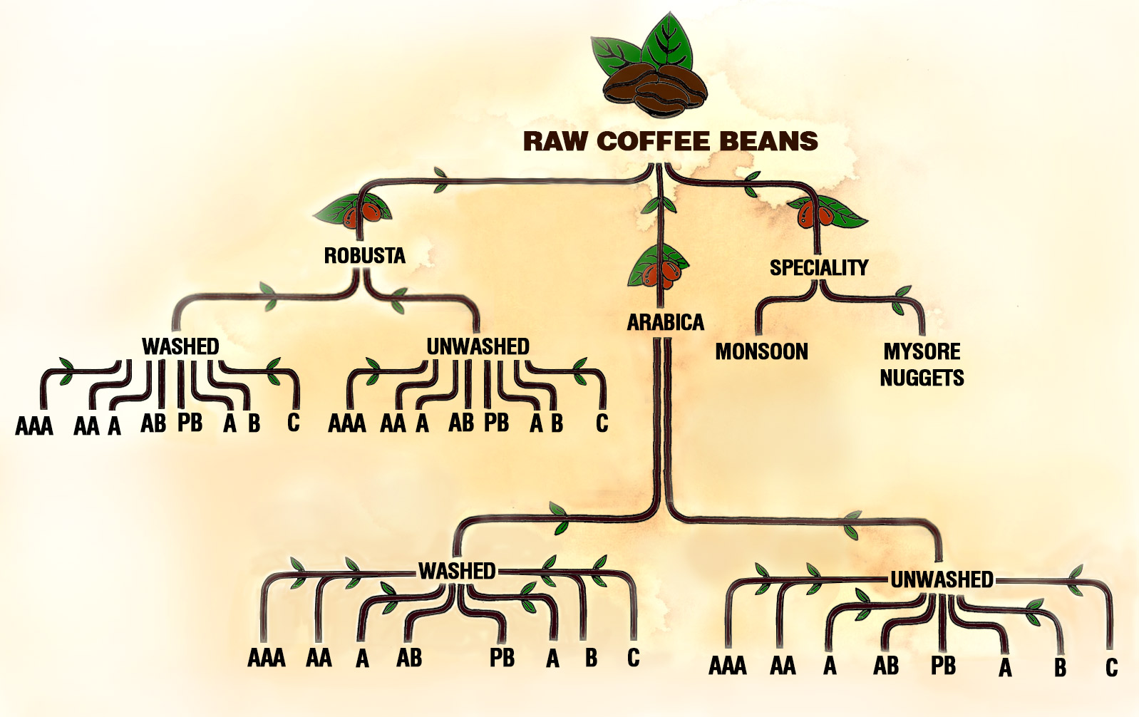 raw-bean-tree-3